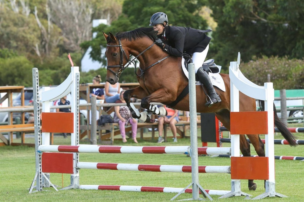 Real Rustum by Real Dream at his  first jumping show
