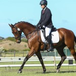 Real Rustum by Real Dream at his first dressage show