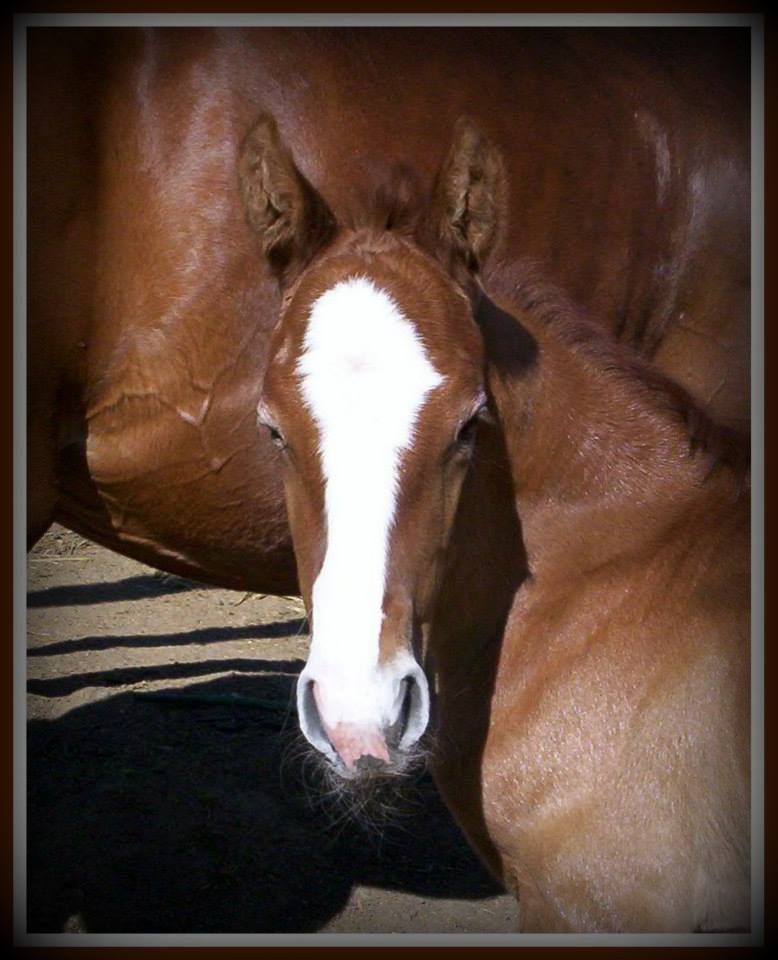 filly by Sabio